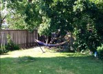My beautiful tree with Hammock